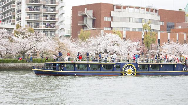 大阪 天満橋 2016年 桜