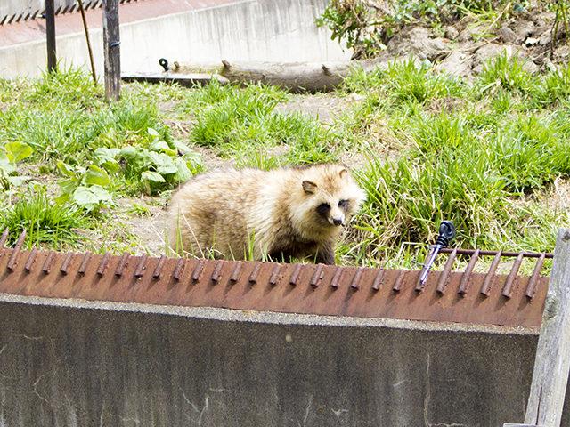 レンタカーでアクセス!旭山動物園をご紹介(所要時間や入場料も)